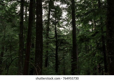 Deep in the Oregon Woods