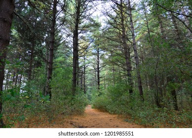 Deep in a pine forest with tall evergreens lining the hidden pathway.