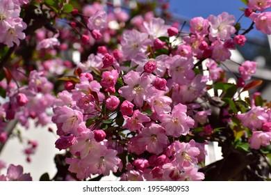 濃いピンク色の花
