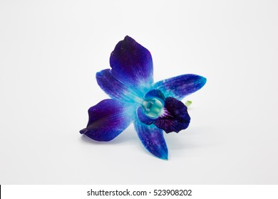 Deep purple blue orchid flower isolated on white background