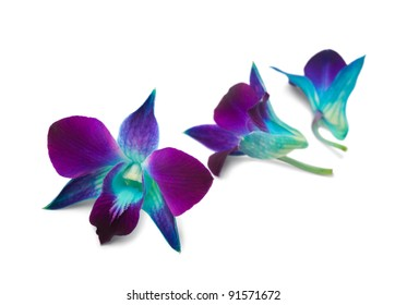 Deep purple orchid isolated on a white background.Shallow DOF