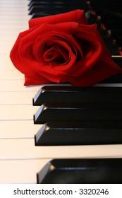 deep Red Rose on Piano keys
