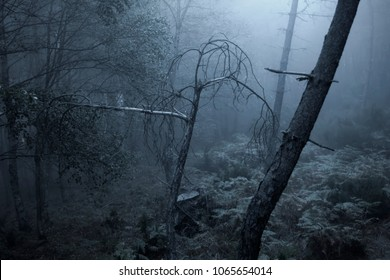 Deep in a scary foggy forest at night or dusk