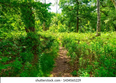 Deep in Sherwood Forest on a summer morning a narrow path leads further in to the forest.