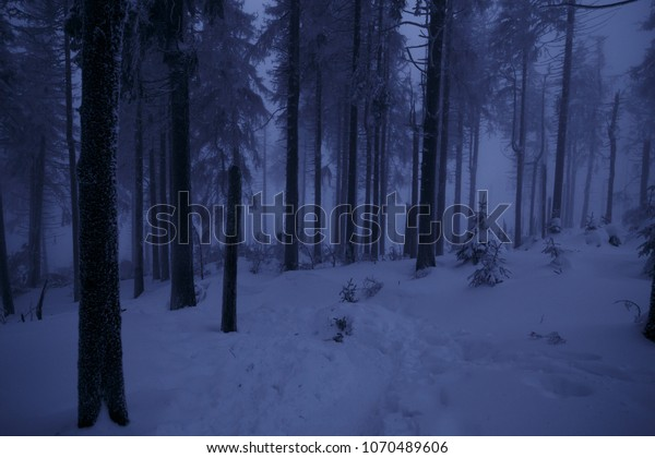 Deep snow and the moon light in the forest