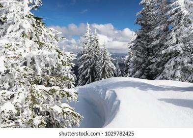 Deep snowdrifts high in the Carpathian mountains. Wild nature winter landscape