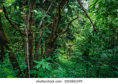 Deep summer forest with warm sunlight on green foliage. Wilderness thicket woods landscape with rich vegetation, outdoor nature background