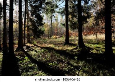 Tiefere Sonne im Wald am Morgen an einem schönen Herbsttag.