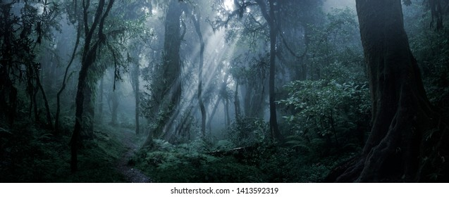 Deep tropical jungle in darkness