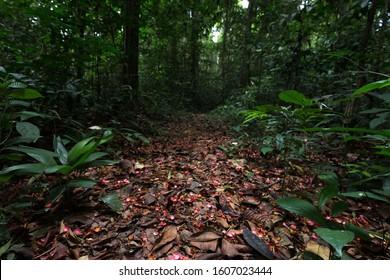 Deep tropical rainforest scene, Africa Ghana