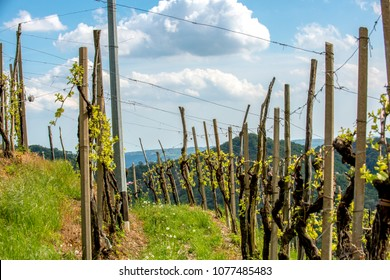 Deep view of a field among vines and vineyard. Prosecco region in Valdobbiadene, Italy.