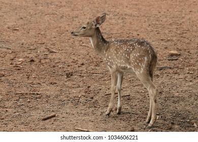 deer animal wildlife