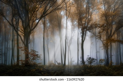 Deer in the autumn foggy forest of Balkan Mountains, Bulgaria.