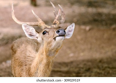 Deer and beautiful horn on the field