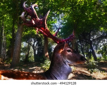 Deer with big bloodied antlers staying in the forest view from right side