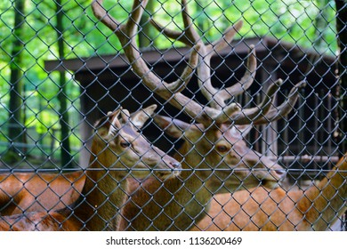 Deer in the cage. Animal in captivity looking through the bars of a cage in the zoo. Animal behind cage in zoo. Cool for illustrations about animal rights.