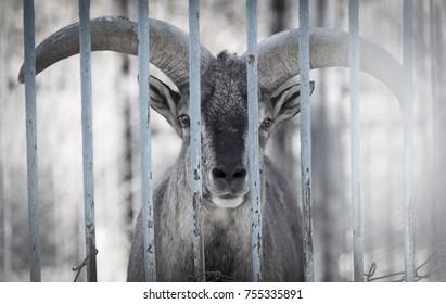 deer in a cage zoo