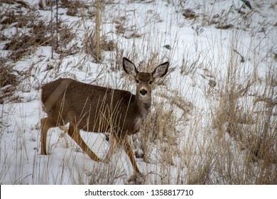 A deer caught me taking its picture in Vernon BC