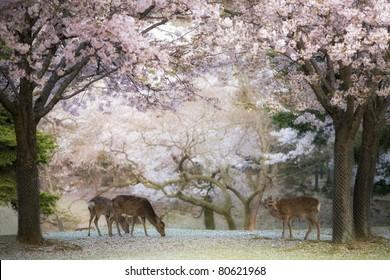 Deer - Cherry Blossom