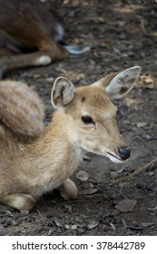 Deer  in ChiangMai Night Safari