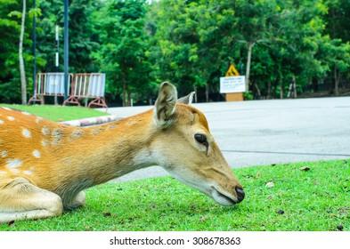 Deer In The City, Wild Animals,Selective Focus