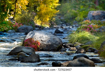Deer Creek dappled in sunlight in Lassen County near Chico on an Autumn day. Fall colors of Aspen trees, Indian Rhubarb and golden grasses along the rocky creek light up yellow, orange and red.