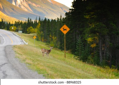 Deer crossing on the side of a highway in the mountains
