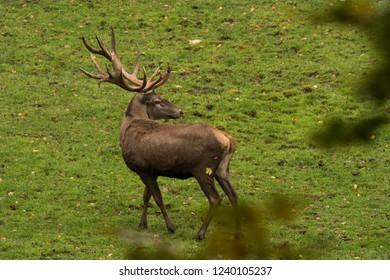 the deer in a deadlock