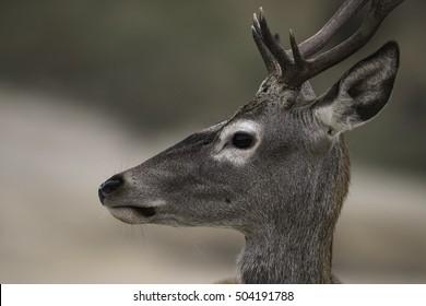 Deer in its ecosystem.
