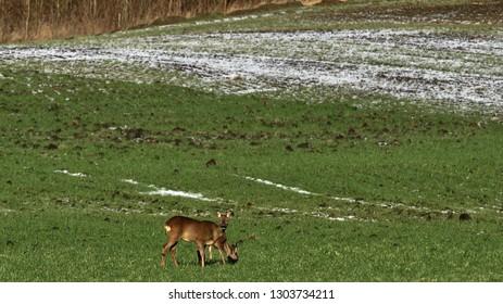 Deer enjoy spring