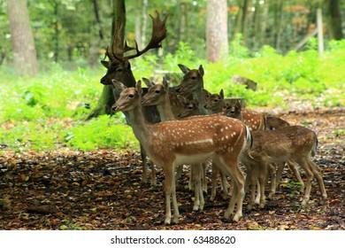 Deer family in the park