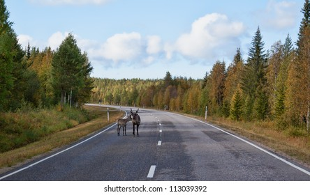 deer with fawn on the road in the autumn forest