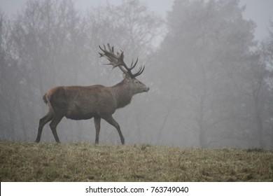 deer fog wild