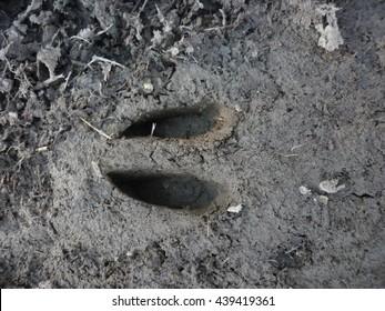 Deer footprint in mud