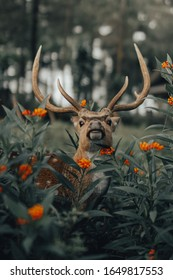 a deer is in the forest