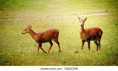 Deer forest background