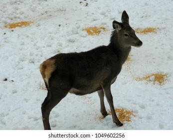 deer in the forest in the winter period