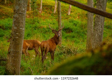 Deer in the forrest
