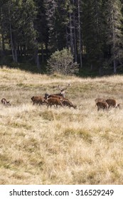 deer group at dolomites park