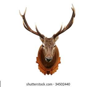Reindeer Head Images Stock Photos Vectors Shutterstock