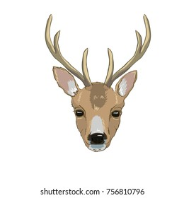 deer head, vector, illustration