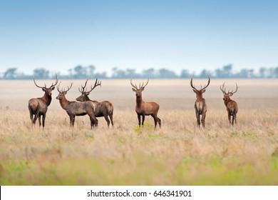 Deer herd in autumn pasture