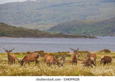 Deer in Highland Wildlife Park in Scotland