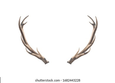 Deer horns isolated on a white background.
