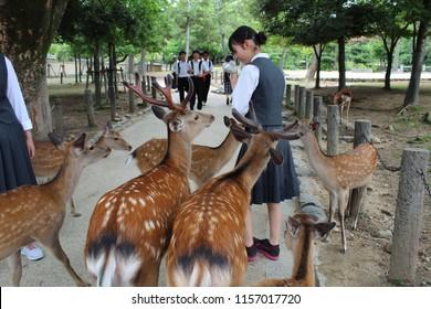 Deer interact with students looking for food at Nara park, Nara - Japan, June 12th 2018