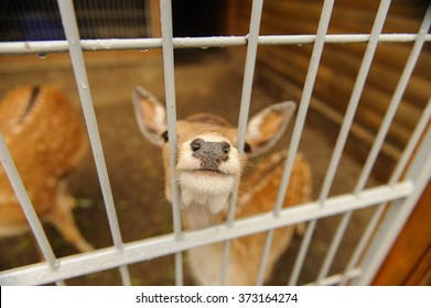 deer into cells looking directly at you closeup