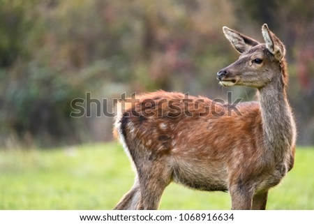 Deer King Forest Stock Photo Edit Now 1068916634 Shutterstock