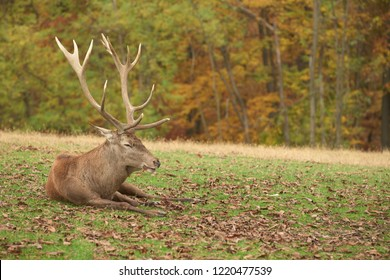 Deer laying down in the nature