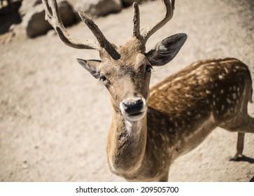 Deer looking