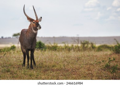 deer looking into the distance